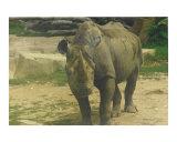 Thick Skinned Rhino