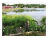 Wellfleet Pond