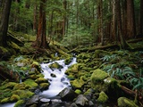 Brook in Sol Duc River Valley