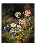 Edelweiss and Other Alpine Flowers