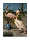 Flamingo and Pelican