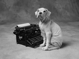 Dog Sitting at Typewriter