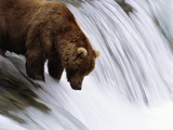 Brown Bear Fishing at Brooks Falls