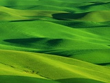 Palouse Hills
