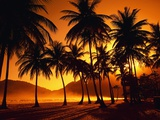 Palm Trees at Beach