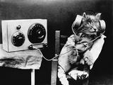 Pet Radio
