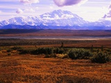 Red Vegetation and Mount McKinley
