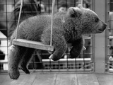 Princess Anne&#39;s Bear on His Swing