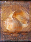 Seashell and Handwriting