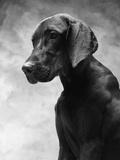 Solemn Dog