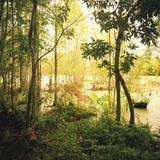 Trees Amid Swampy Garden