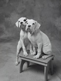 Two Dogs at Bench