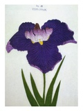 Yedo-Jiman Book of a Purple Iris