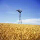 Windmill in Wheat Field