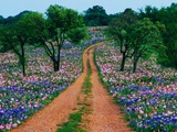 Wildflowers Along a Dirt Road
