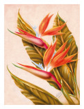 Hawaiian Bird of Paradise  c1940s
