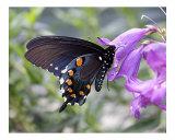 Butterfly 308