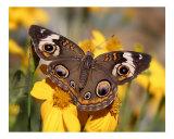 Butterfly 302