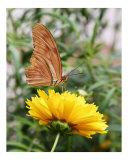 Butterfly 304