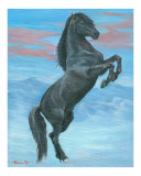 Majestic Black Stallion