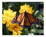 Butterfly 319
