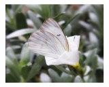 Butterfly 312