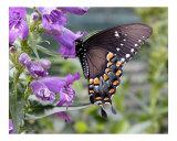 Butterfly 322