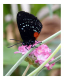 Butterfly 315