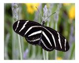 Butterfly 320