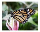 Butterfly 321