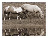 Horses Grazing Near Water - Sepia