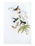 A Monograph of the Trochilidae or Family of Hummingbirds  Published 1849-1861