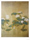 Lotus Pond  1726