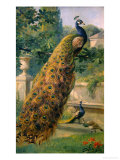 Peacocks in the Park  1886