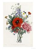 Collection Des Fleurs et Des Fruits  1805