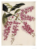 The Botanical Cabinet  Consisting of Coloured Delineations of Plants from All Countries