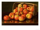 Apples  circa 1892