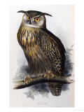 "Eagle Owl  Lithographic Plate from ""The Birds of Europe"""