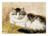 A Cat  1893