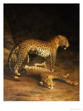 Two Leopards Lying in the Exeter Exchange, 1808 Giclée par Jacques-Laurent Agasse