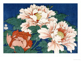 Three Stems of Peonies on a Blue Background  1857