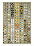 One Hundred and Fifty-eight Medium and Small-sized Moths in Seven Columns