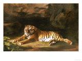 Portrait of the Royal Tiger, circa 1770 Giclée par George Stubbs