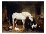 Stable Companions Giclée par John Frederick Herring I