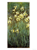 Yellow Irises