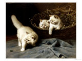 White Angora Kittens with a Beetle