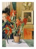 Brita's Cactus  1904