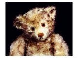 "Close Up of a Steiff ""Dual"" Mohair Teddy Bear  C  1926"