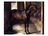 Anglo-Arabian Stallion in the Imperial Stables at Versailles