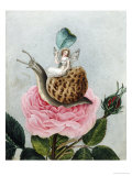 A Fairy Holding a Leaf  Sitting on a Snail Above a Rose